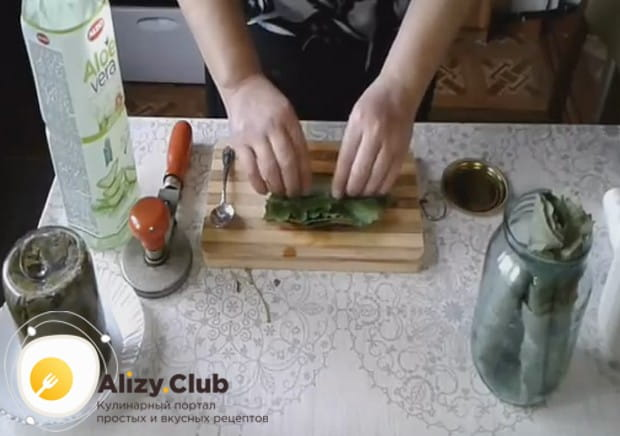 Пере тем, как замариновать виноградные листья для долмы, складываем их стопочкой и затем скручиваем в трубочку.