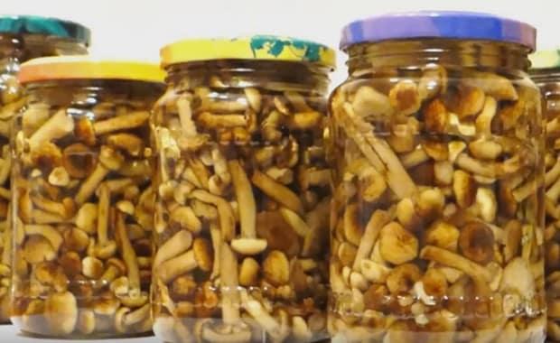 опята соленые на зиму рецепты приготовления видео